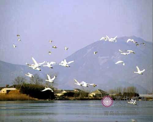 洛东江候鸟栖息地