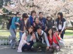 全日制留日班-中山公园樱花赏花节
