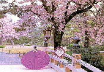 人们在樱树下举行各种宴会,聚餐(宴会)